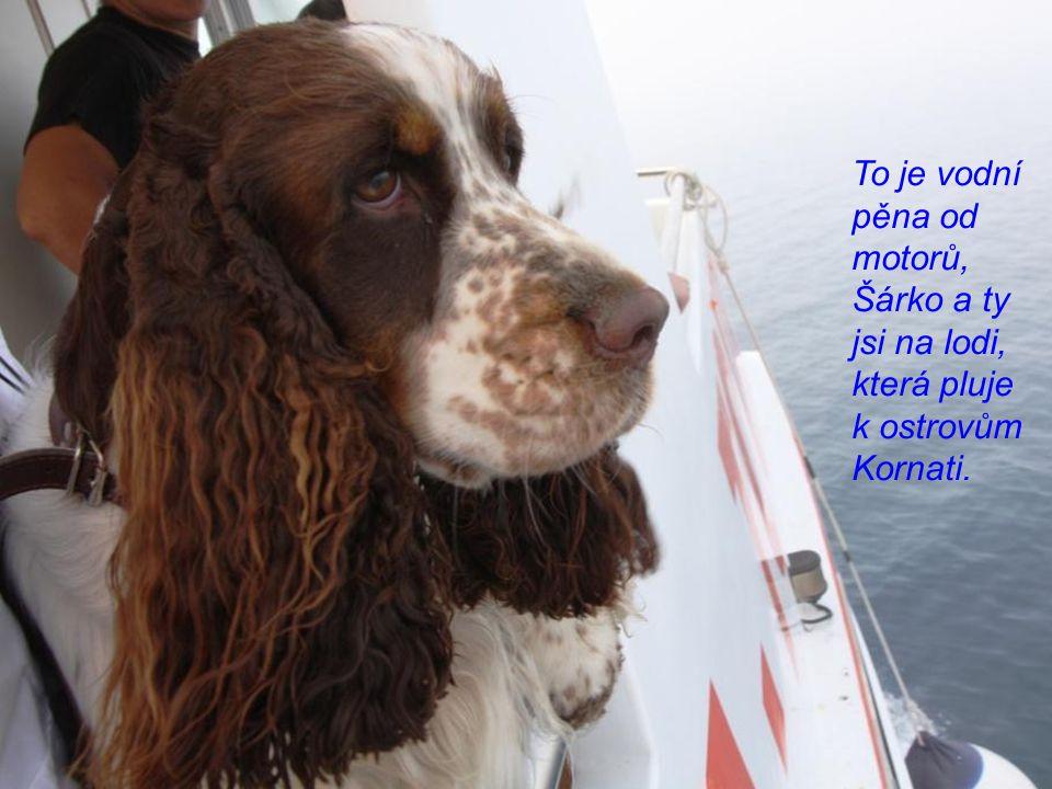 To je vodní pěna od motorů, Šárko a ty jsi na lodi, která pluje k ostrovům Kornati.