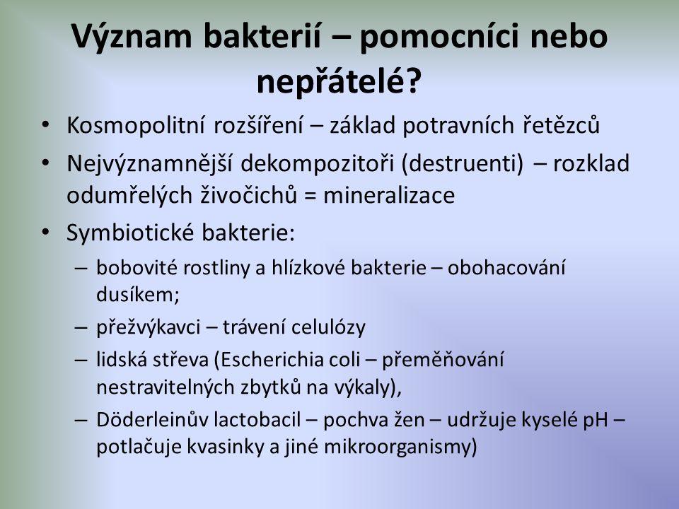 Význam bakterií – pomocníci nebo nepřátelé? Kosmopolitní rozšíření – základ potravních řetězců Nejvýznamnější dekompozitoři (destruenti) – rozklad odu