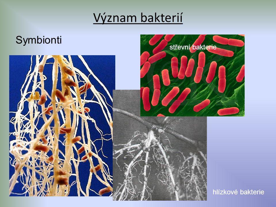 Význam bakterií Symbionti hlízkové bakterie střevní bakterie
