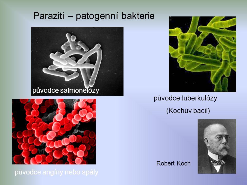 Paraziti – patogenní bakterie původce salmonelózy původce angíny nebo spály původce tuberkulózy (Kochův bacil) Robert Koch