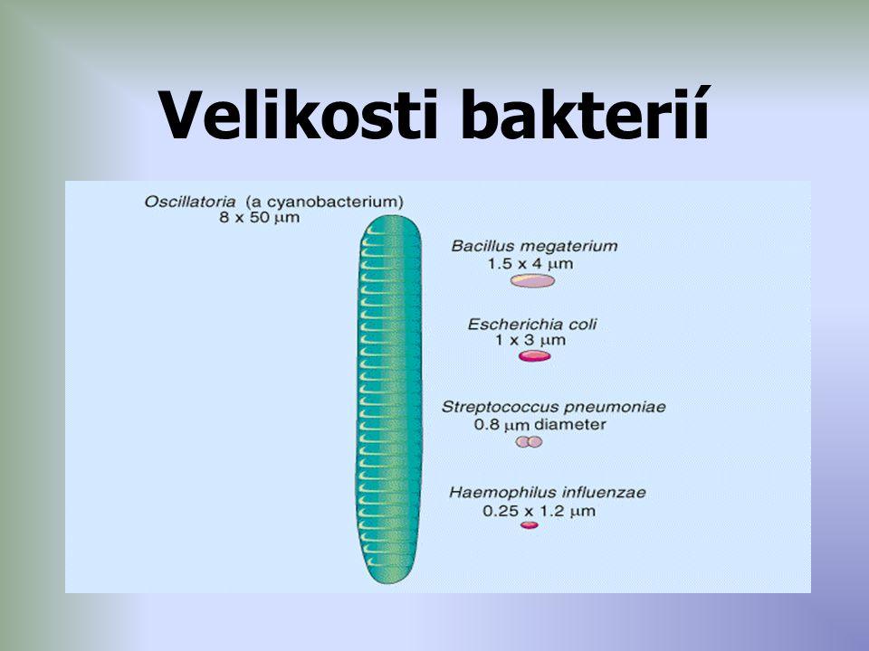 Stavba Prokaryotická buňka – nemá pravé jádro – ale nukleoid = jedna molekula DNA – kružnice – jeden chromozom – v něm genetická informace Plazmidy – malé kružnice DNA mimo jádro Ribozomy – tvorba bílkovin Cytoplazmatická membrána – fosfolipidy Buněčná stěna – murien Bičíky, fimbrie (vlásky, pili) Některé mají slizové pouzdro – kapsula