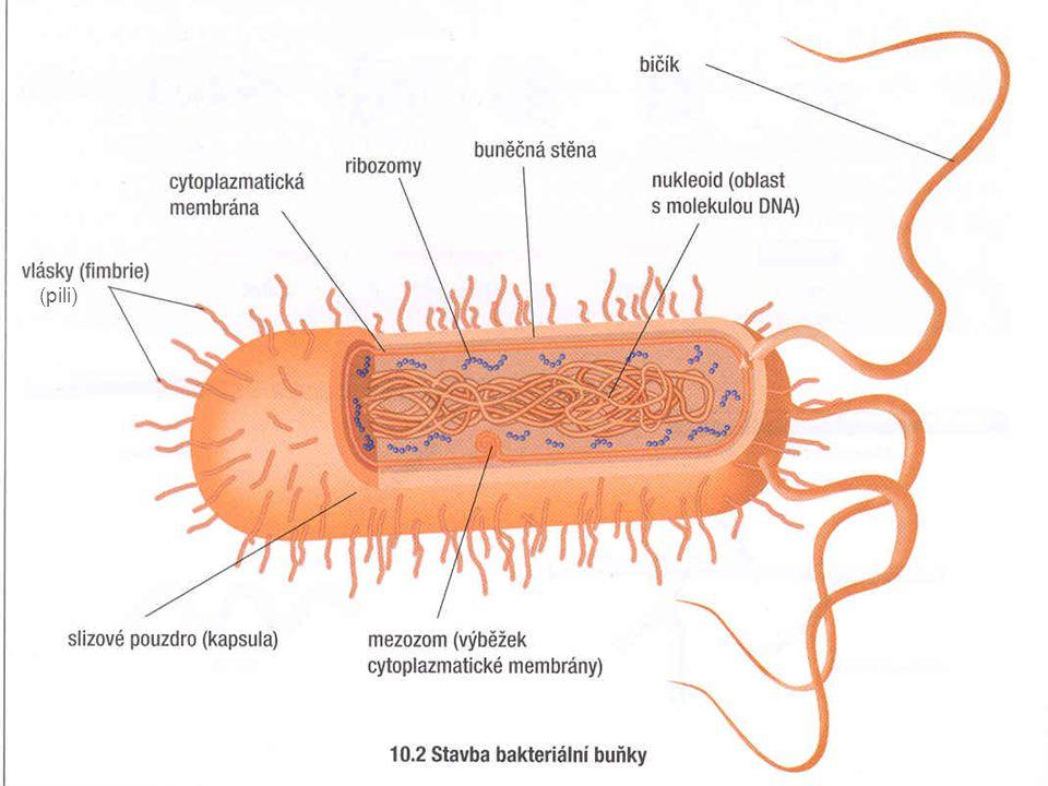 Význam bakterií – pomocníci nebo nepřátelé.
