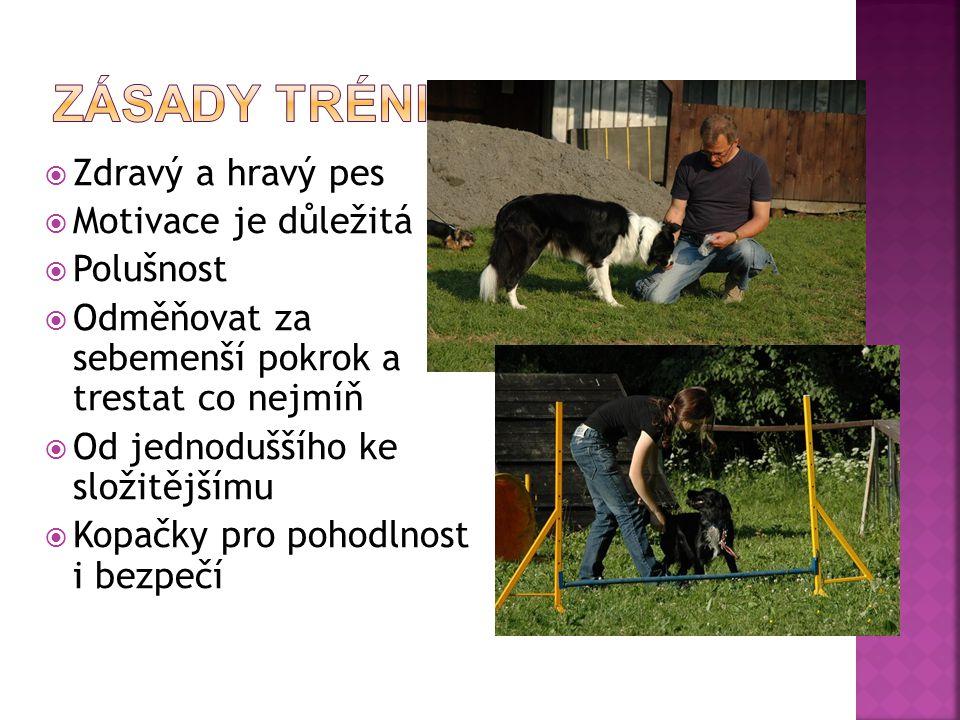  Zdravý a hravý pes  Motivace je důležitá  Polušnost  Odměňovat za sebemenší pokrok a trestat co nejmíň  Od jednoduššího ke složitějšímu  Kopačky pro pohodlnost i bezpečí