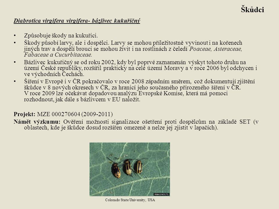Škůdci Diabrotica virgifera virgifera- bázlivec kukuřičný Způsobuje škody na kukuřici. Škody působí larvy, ale i dospělci. Larvy se mohou příležitostn
