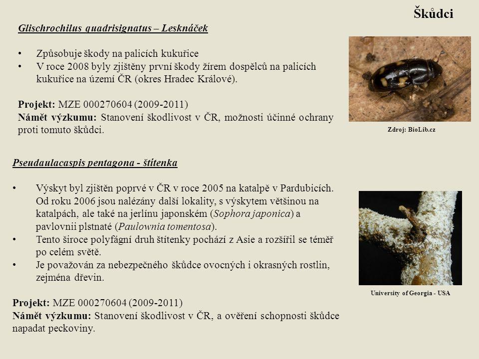 Pseudaulacaspis pentagona - štítenka Výskyt byl zjištěn poprvé v ČR v roce 2005 na katalpě v Pardubicích. Od roku 2006 jsou nalézány další lokality, s