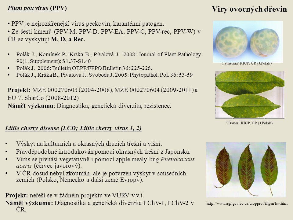 Tomato yellow leaf curl virus (TYLCV) Způsobuje nemalé ztráty při pěstování rajčat v JZ Evropě.