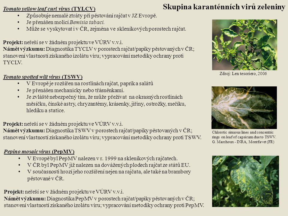 Tomato yellow leaf curl virus (TYLCV) Způsobuje nemalé ztráty při pěstování rajčat v JZ Evropě. Je přenášen molicí Bemisia tabaci. Může se vyskytovat