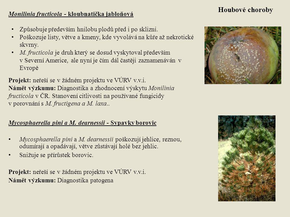 Houbové choroby Mycosphaerella pini a M. dearnessii - Sypavky borovic Mycosphaerella pini a M. dearnessii poškozují jehlice, reznou, odumírají a opadá