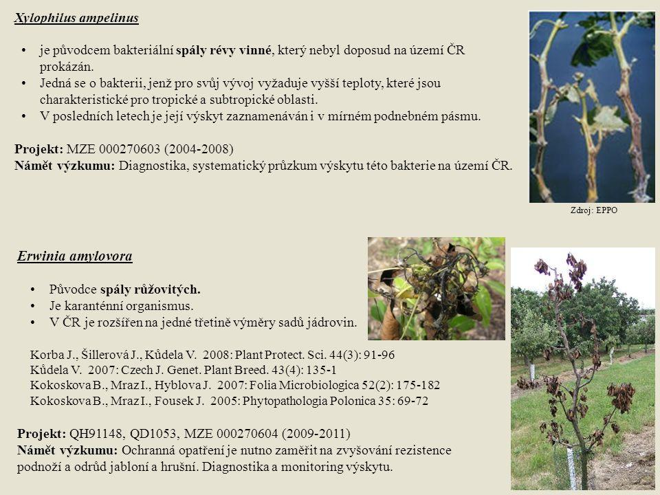 Xylophilus ampelinus je původcem bakteriální spály révy vinné, který nebyl doposud na území ČR prokázán. Jedná se o bakterii, jenž pro svůj vývoj vyža