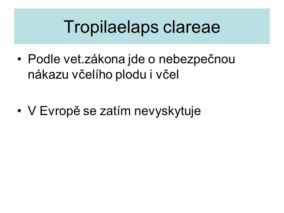 Tropilaelaps clareae Podle vet.zákona jde o nebezpečnou nákazu včelího plodu i včel V Evropě se zatím nevyskytuje