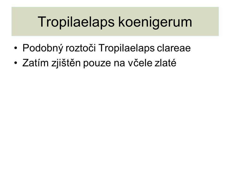 Tropilaelaps koenigerum Podobný roztoči Tropilaelaps clareae Zatím zjištěn pouze na včele zlaté