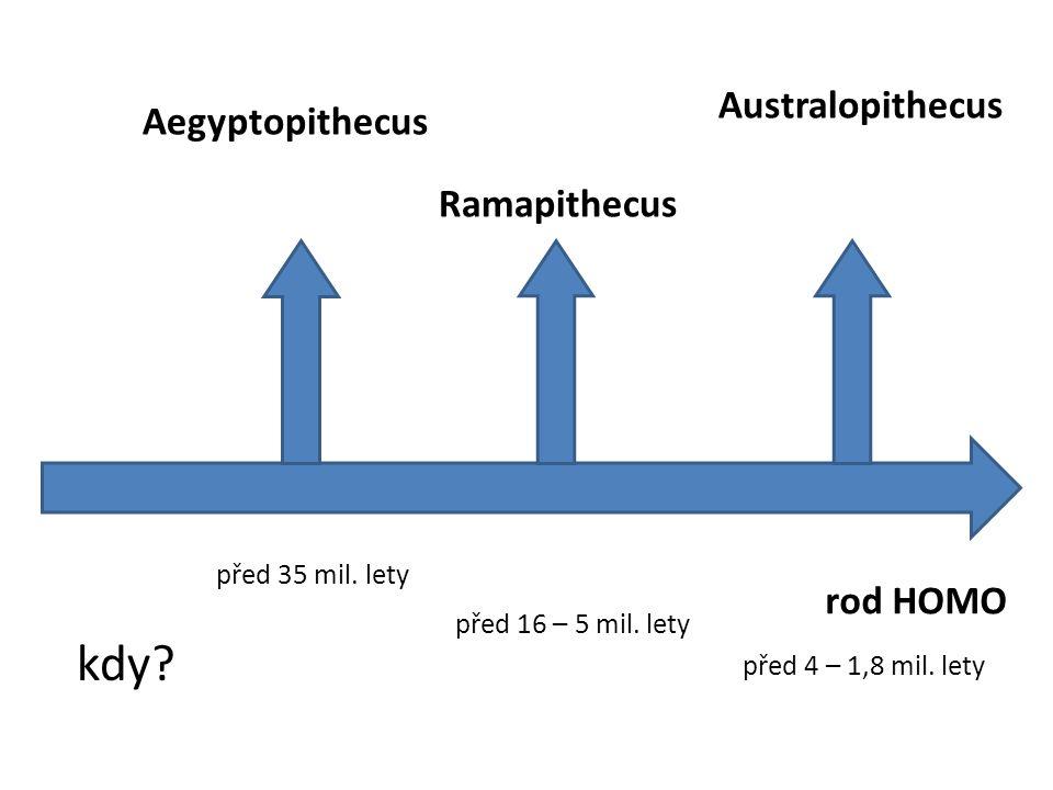 Přiřaď obrázky k pojmům: Aegyptopithecus Ramapithecus Australopithecus Obr. 2Obr. 1 Obr. 3