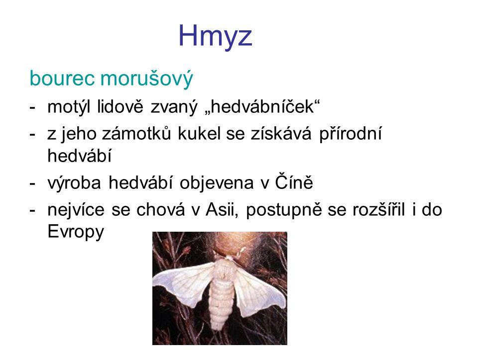 """Hmyz bourec morušový -motýl lidově zvaný """"hedvábníček"""" -z jeho zámotků kukel se získává přírodní hedvábí -výroba hedvábí objevena v Číně -nejvíce se c"""