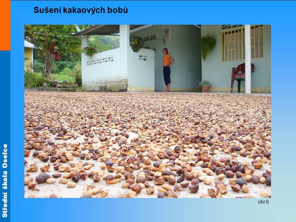 Střední škola Oselce obr.6 Sušení kakaových bobů