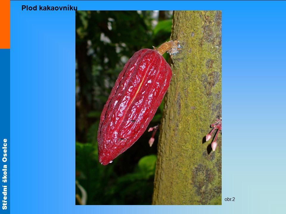 Střední škola Oselce obr.2 Plod kakaovníku