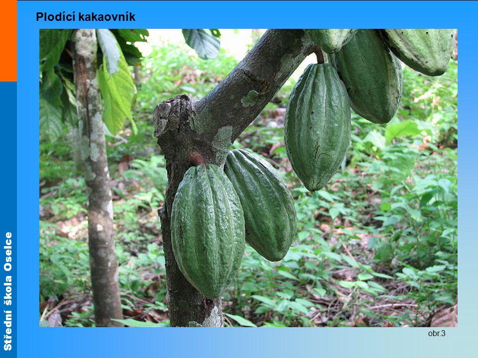 Střední škola Oselce Kakaové boby jsou semena stromu kakaovníku červenofialové plody mají tvar okurky a váží asi 500 g uvnitř jsou uložena semena (boby) v množství 30 až 50 kusů obr.4