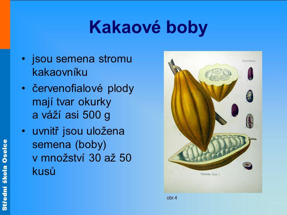 Střední škola Oselce Kakaové boby jsou semena stromu kakaovníku červenofialové plody mají tvar okurky a váží asi 500 g uvnitř jsou uložena semena (bob