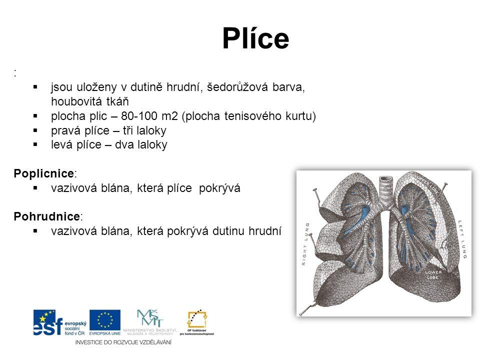 Plíce II Plícní sklípek:  základní funkční jednotka – zde probíhá výměna dýchacích plynů Bránice:  nejdůležitější dýchací sval (odděluje dutinu hrudní a bříšní) Mezižeberní svaly:  zvedají žebra a zvyšují objem hrudníku