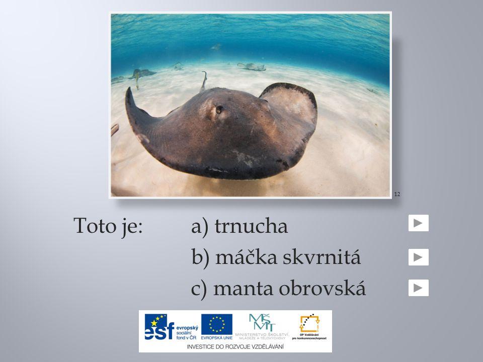Toto je:a) trnucha b) máčka skvrnitá c) manta obrovská 12