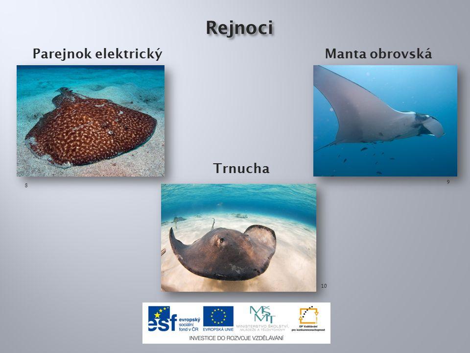 Žraloci mají povrch těla: a)bez šupin b)kryté ostrými tvrdými šupinami c)kryté velmi měkkými šupinkami