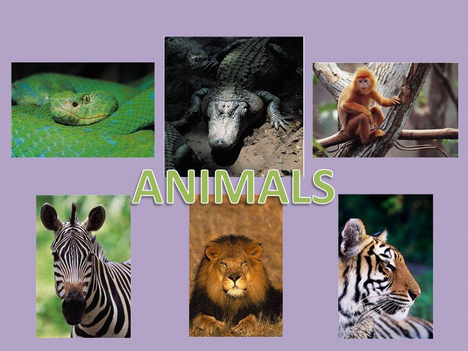 ANIMALS Název sady materiálů: Anglický jazyk pro 2. ročník Název materiálu: VY_32_INOVACE_AJ_2_1601_animals Autor: Bc. Dagmar Pavlová Datum vytvoření: