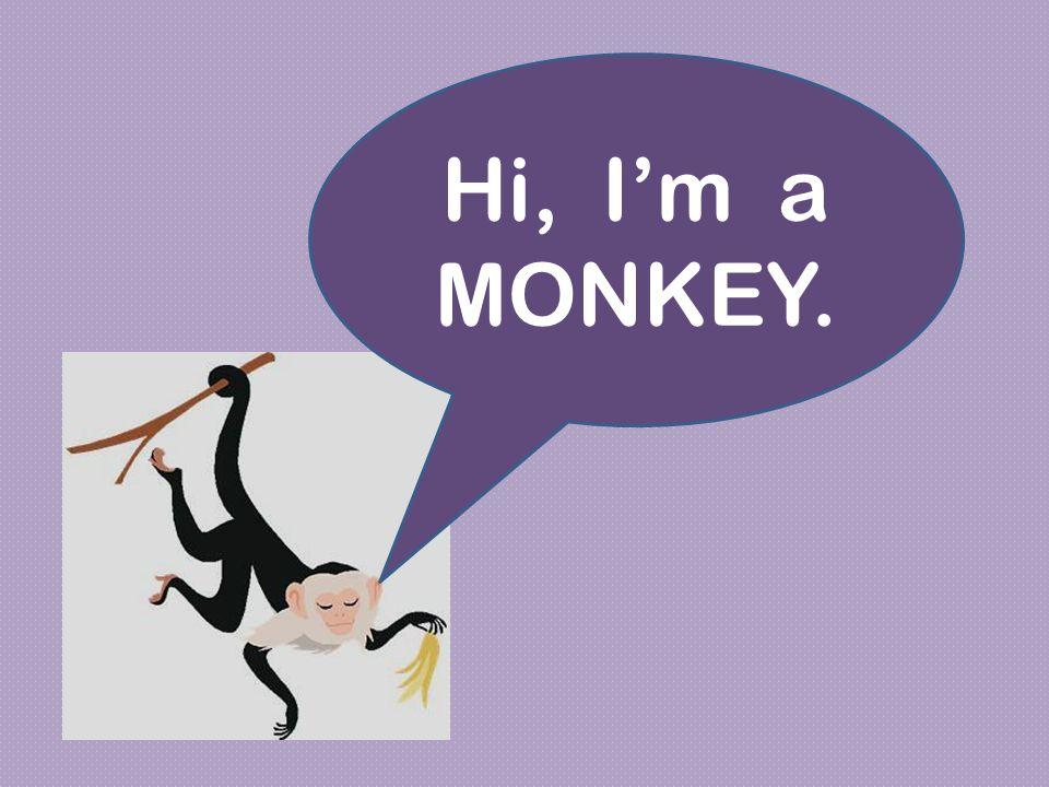 Hi, I'm a MONKEY.