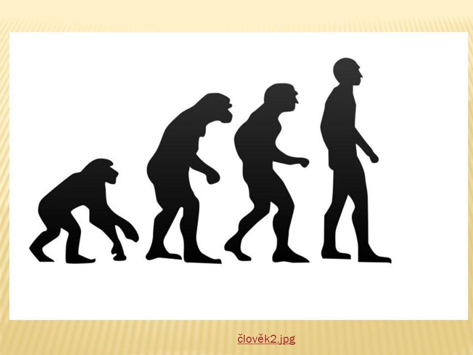  Moderní člověk se vyvinul z předků před asi 10 000 lety  Živil se lovem, sbíral rostlinnou stravu  Později začal chovat zvířata a žít jako zeměděl