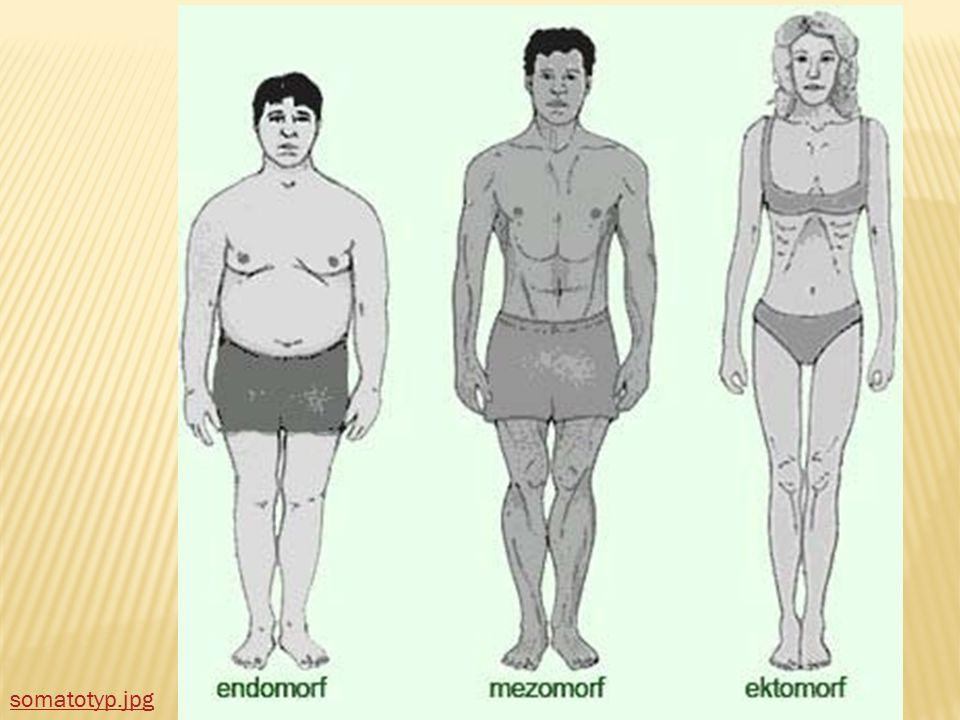  Podle stavby těla dělíme lidi na tři skupiny:  Ektomorfní – velmi štíhlí, hubení lidé  Mezomorfní – střední atletická postava  Endomorfní – silná