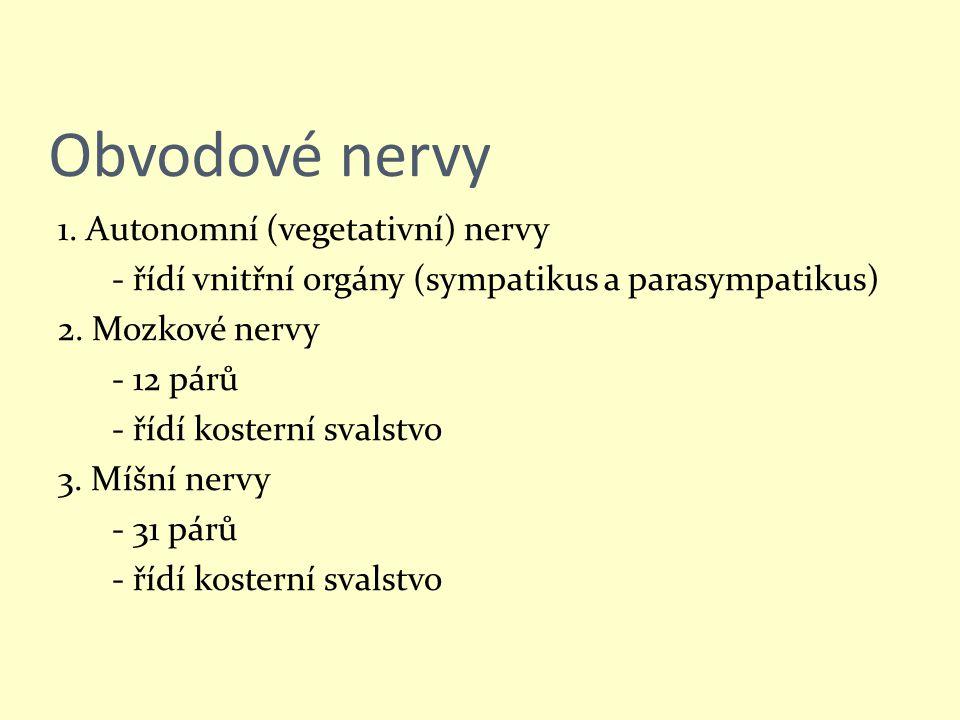 Obvodové nervy 1. Autonomní (vegetativní) nervy - řídí vnitřní orgány (sympatikus a parasympatikus) 2. Mozkové nervy - 12 párů - řídí kosterní svalstv