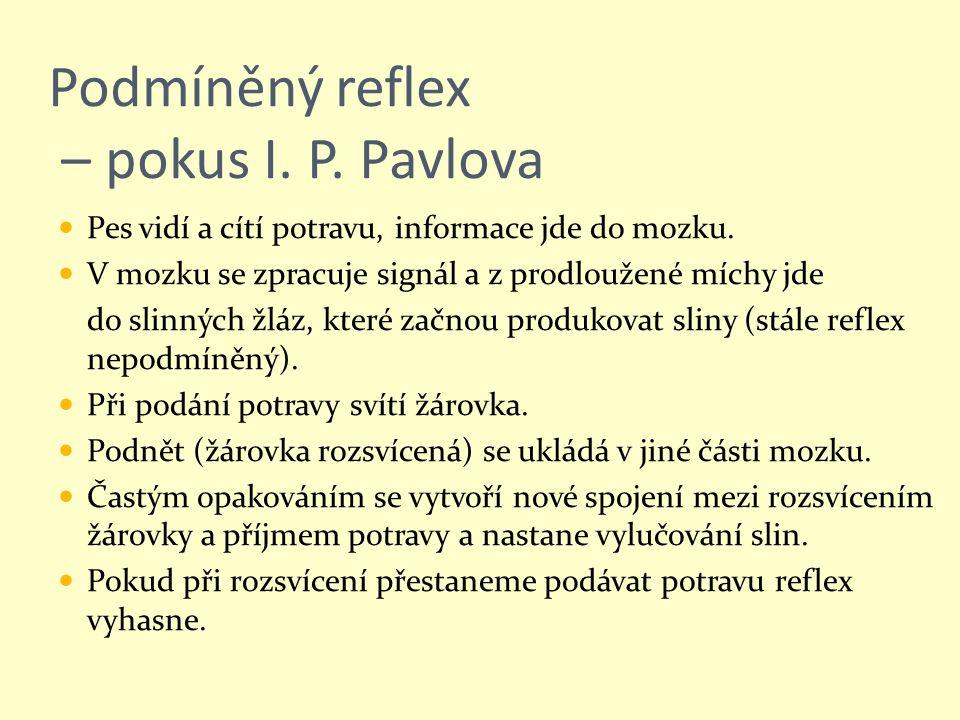 Podmíněný reflex – pokus I. P. Pavlova Pes vidí a cítí potravu, informace jde do mozku. V mozku se zpracuje signál a z prodloužené míchy jde do slinný