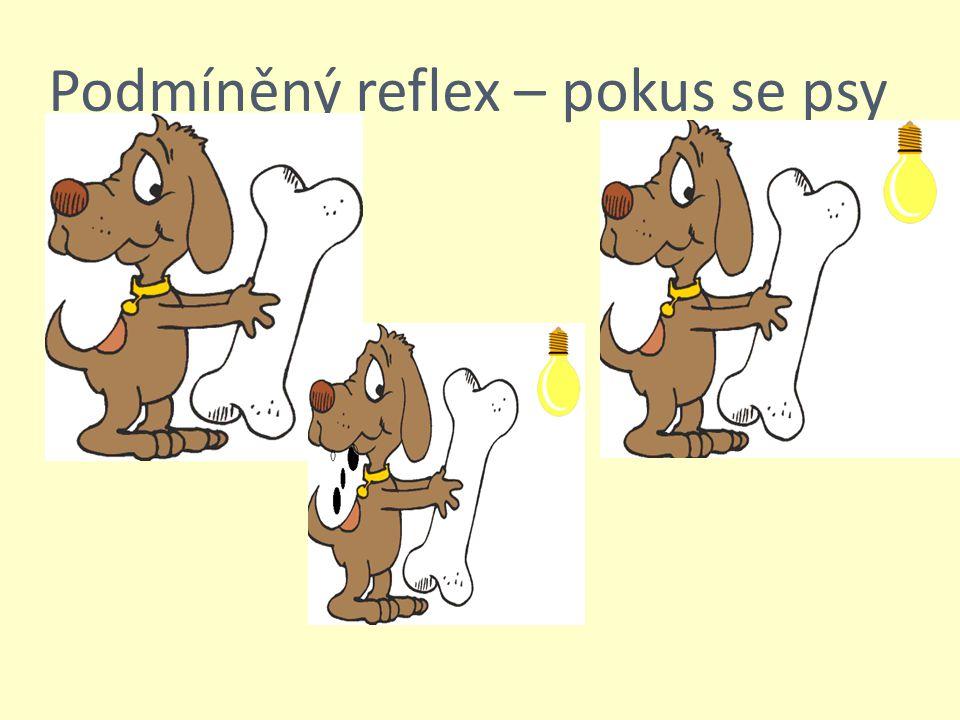 Podmíněný reflex – pokus se psy