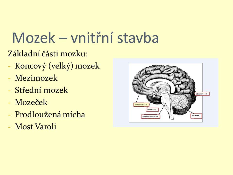 Mozek – vnitřní stavba Základní části mozku: - Koncový (velký) mozek - Mezimozek - Střední mozek - Mozeček - Prodloužená mícha - Most Varoli