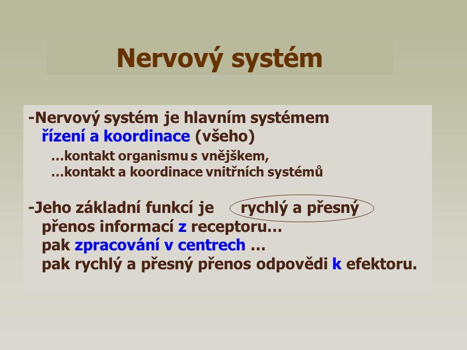Nervový systém -Nervový systém je hlavním systémem řízení a koordinace (všeho) …kontakt organismu s vnějškem, …kontakt a koordinace vnitřních systémů