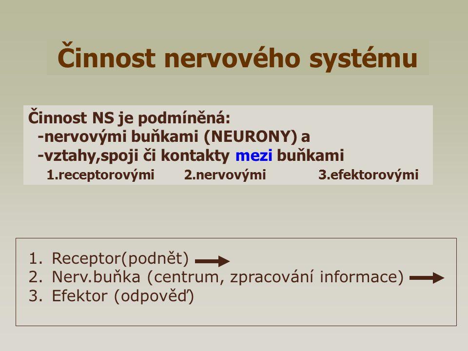 Činnost nervového systému Činnost NS je podmíněná: -nervovými buňkami (NEURONY) a -vztahy,spoji či kontakty mezi buňkami 1.receptorovými 2.nervovými 3