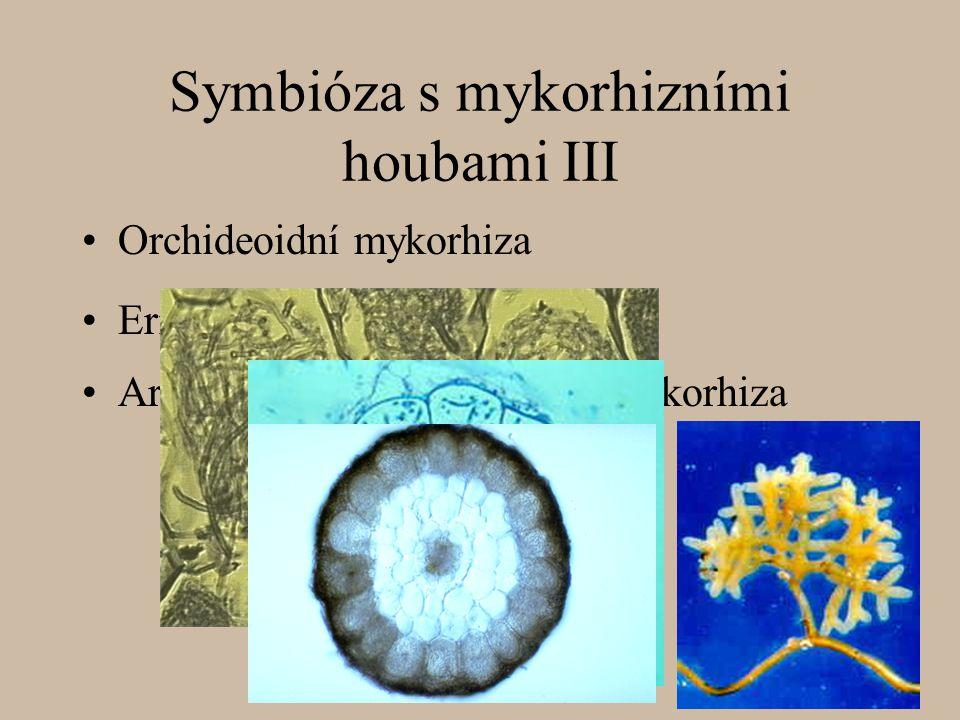 Symbióza s mykorhizními houbami III Orchideoidní mykorhiza Arbutoidní a monotropoidní mykorhiza Erikoidní mykorhiza