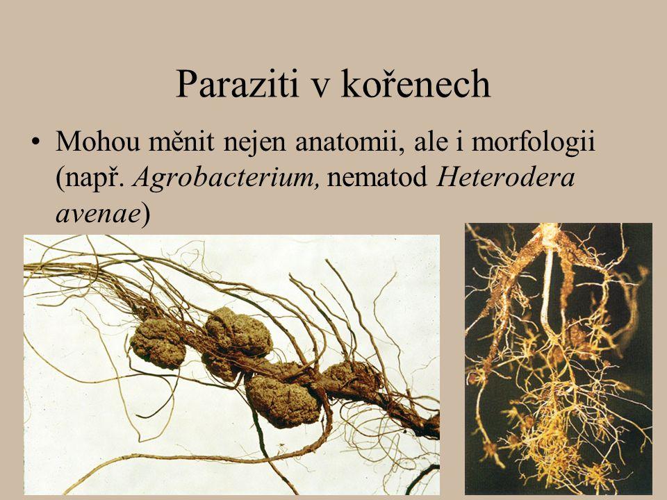 Paraziti v kořenech Mohou měnit nejen anatomii, ale i morfologii (např. Agrobacterium, nematod Heterodera avenae)