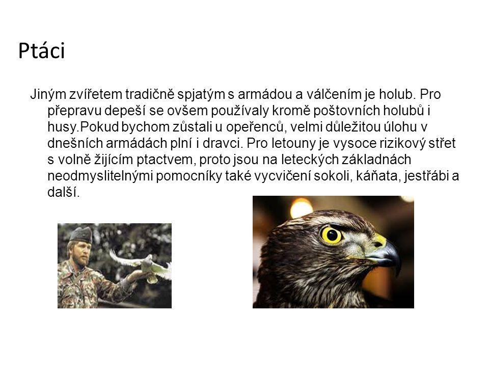 Ptáci Jiným zvířetem tradičně spjatým s armádou a válčením je holub.