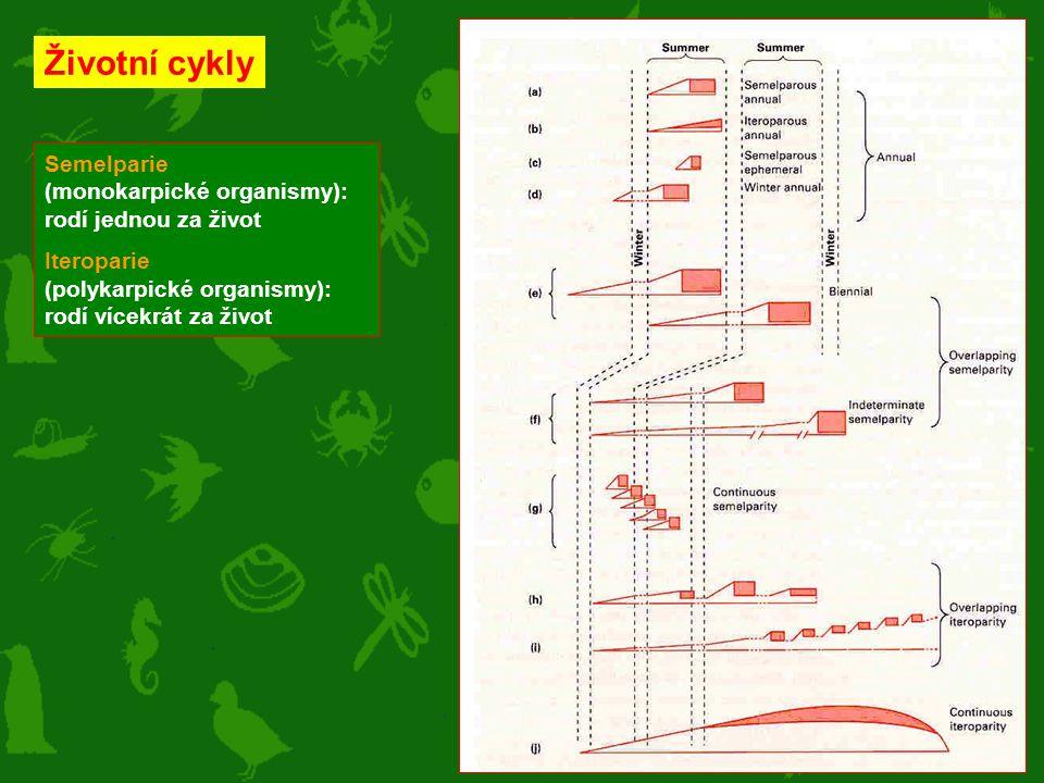 Semelparie (monokarpické organismy): rodí jednou za život Iteroparie (polykarpické organismy): rodí vícekrát za život Životní cykly