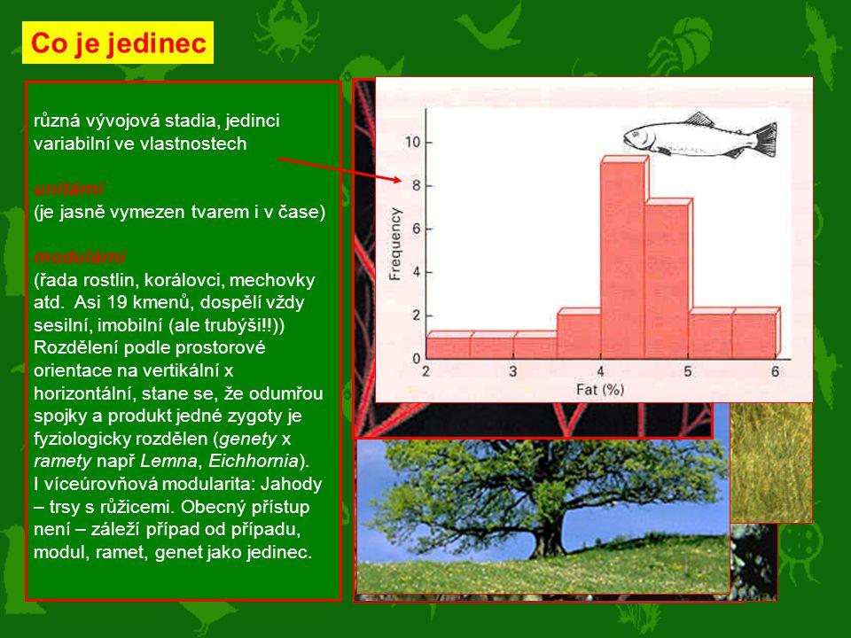 různá vývojová stadia, jedinci variabilní ve vlastnostech unitární (je jasně vymezen tvarem i v čase) modulární (řada rostlin, korálovci, mechovky atd