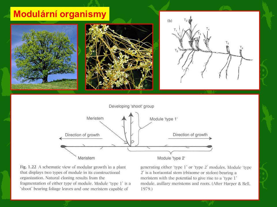 Modulární organismy