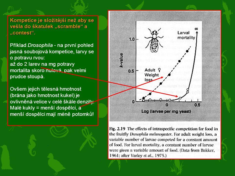 """Kompetice je složitější než aby se vešla do škatulek """"scramble"""" a """"contest"""". Příklad Drosophila - na první pohled jasná soubojová kompetice, larvy se"""
