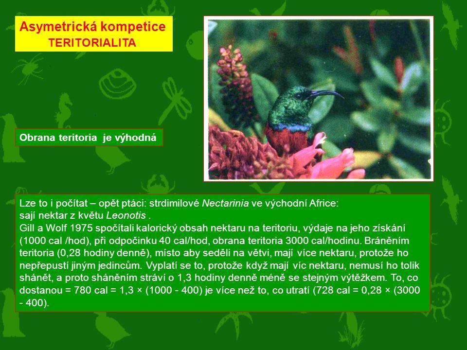 Lze to i počítat – opět ptáci: strdimilové Nectarinia ve východní Africe: sají nektar z květu Leonotis. Gill a Wolf 1975 spočítali kalorický obsah nek