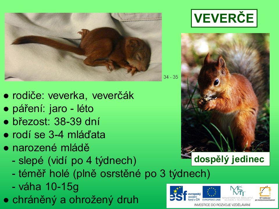 ● rodiče: ježice, ježek ● páření: květen - říjen ● březost: 30-35 dní ● rodí se 4-9 mláďat ● narozené mládě - holé, slepé (vidí po 2 týdnech) - první