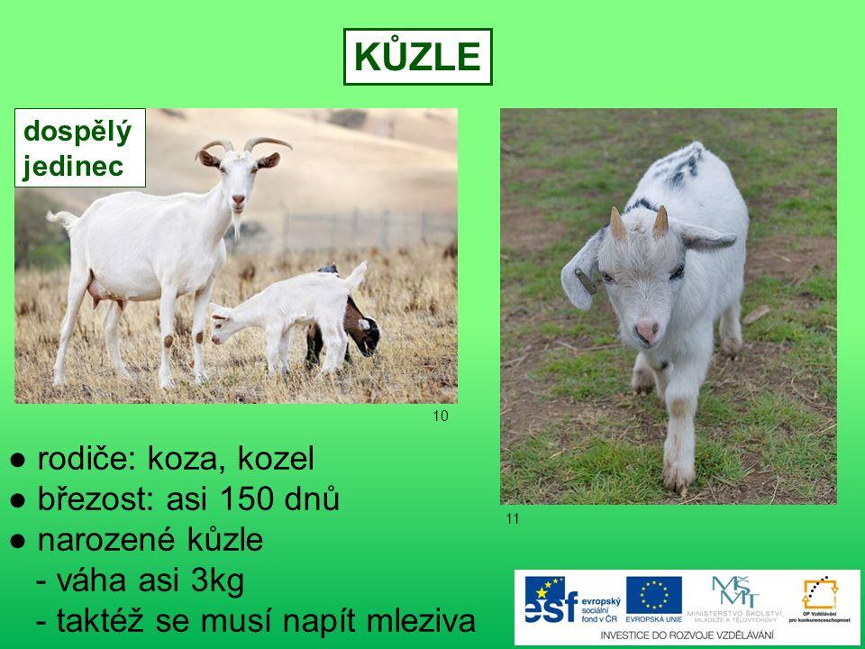 POUŽITÉ ZDROJE 1) www.office.microsoft.com 2) www.office.microsoft.com 3) www.office.microsoft.com 4) www.office.microsoft.com 5) File:Mare and foal (Kvetina-Marie).jpg.