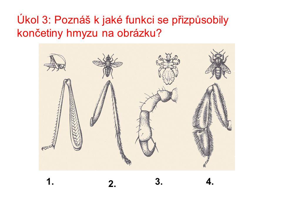 Úkol 3: Poznáš k jaké funkci se přizpůsobily končetiny hmyzu na obrázku? 1. 2. 3.4.