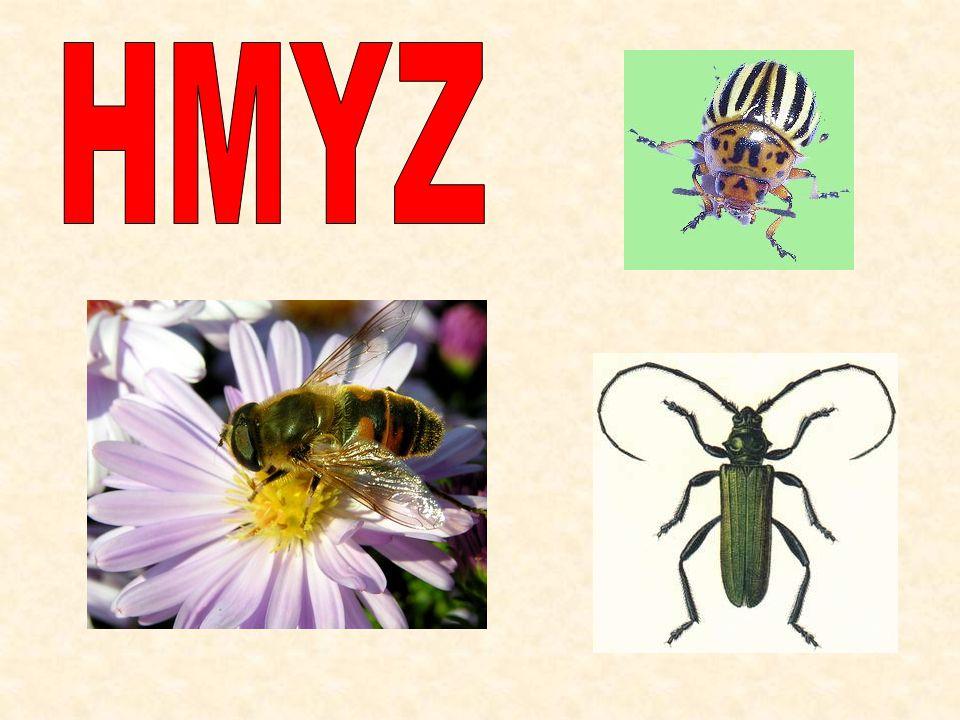 Znaky hmyzu hlava, hruď, zadeček dýchají vzdušnicemi 2 páry křídel 3 páry článkovaných končetin složené oči nepřímý vývin
