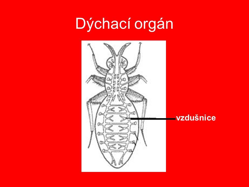 Vývin hmyzu nepřímý 1.proměna dokonalá vajíčko larva kukla dospělý jedinec 2.