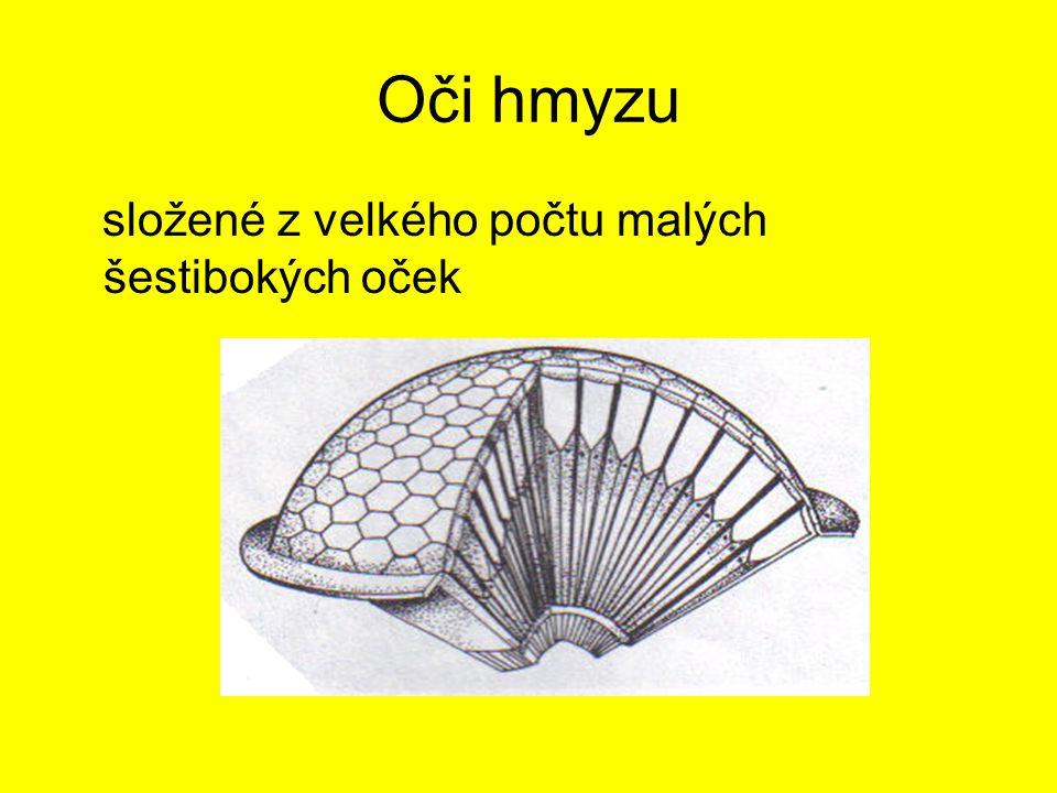 Zdroje: http://www.google.cz/ Přírodopis 7, SNP Praha 1999