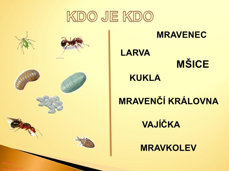 www.ahaonline.cz 1 – Na hnízdo útočí mravenci otrokáři, brání ho vojáci. 2 – Otrokáři unášejí larvy, aby z vylíhnutých mravenců udělali své služebníky