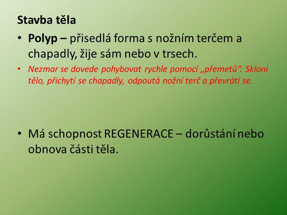 Stavba těla Polyp – přisedlá forma s nožním terčem a chapadly, žije sám nebo v trsech.